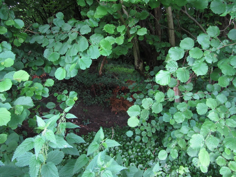 Naturkundliche Führung: Der Wald als ökologisches System