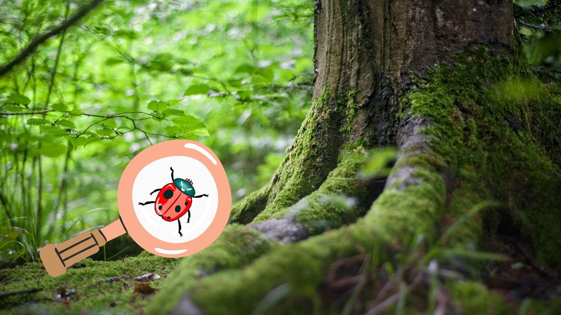 Walddetektive